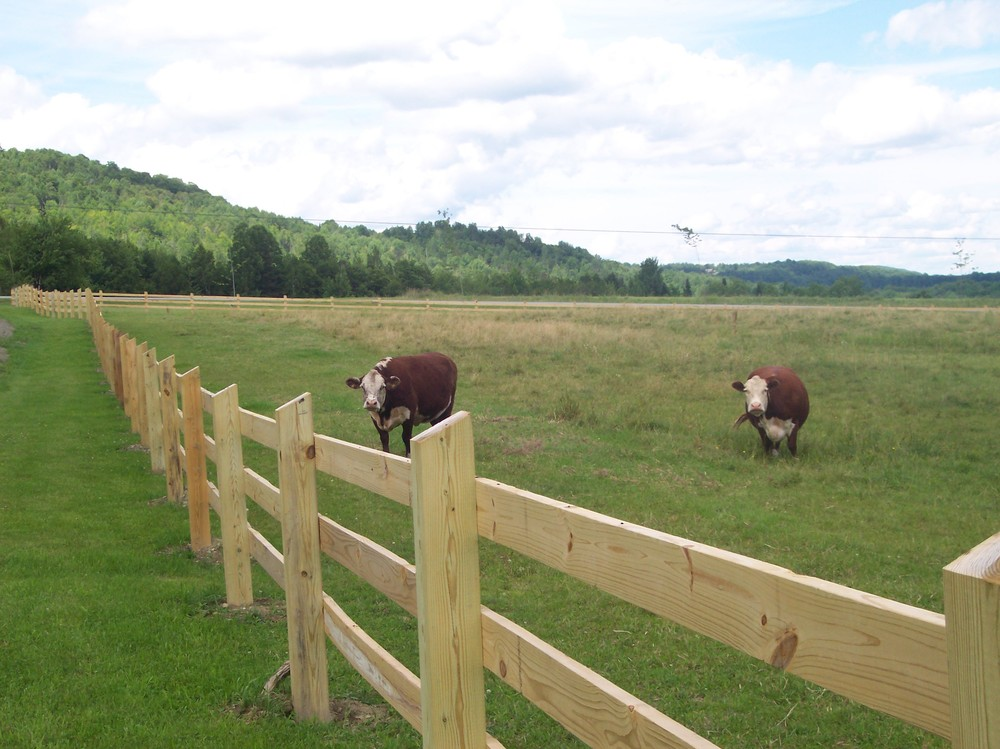 Cattle Fencing Design Livestock fencing round hill fence keeping in the cows workwithnaturefo